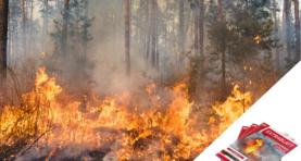 Extrablatt | Vegetationsbrand